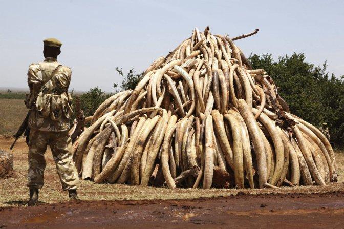 Kenia ha realizado 21 incautaciones de trofeos de caza ilegal desde enero
