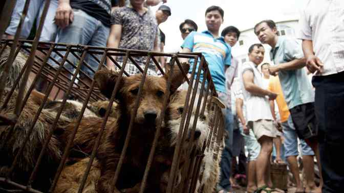 Salvan a mil perros que iban a ser comidos en un polémico festival chino