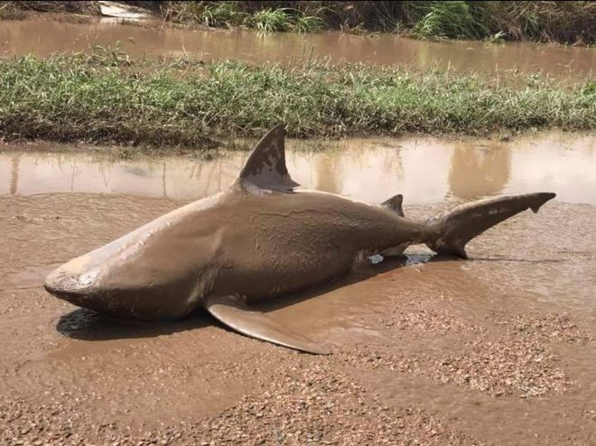 Dos muertos y 80.000 damnificados por el ciclón Debbie en Australia