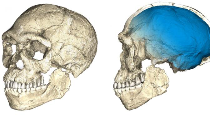 Fósil marroquí de Yebel Irhud confirma el origen panafricano del Homo Sapiens
