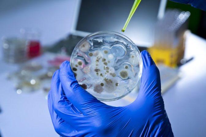 Las bacterias y el calor