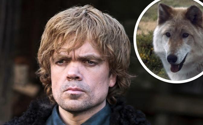 """Dinklage pide responsabilidad a los fans de """"Game of Thrones"""" que compran huskies"""