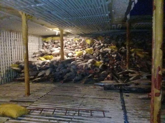 Ecuador protesta a China por labores de pesca de especies protegidas de Islas Galápagos